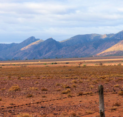 Ikara-Flinders_Ranges_National_Park_16